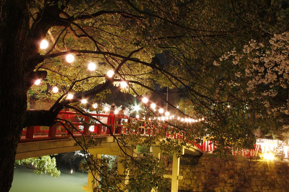 岡崎の桜まつり2