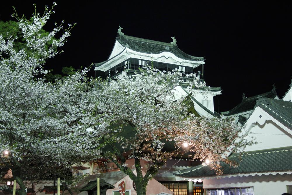 岡崎の桜まつり5