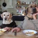 人間と犬のハイブリッド二人羽織